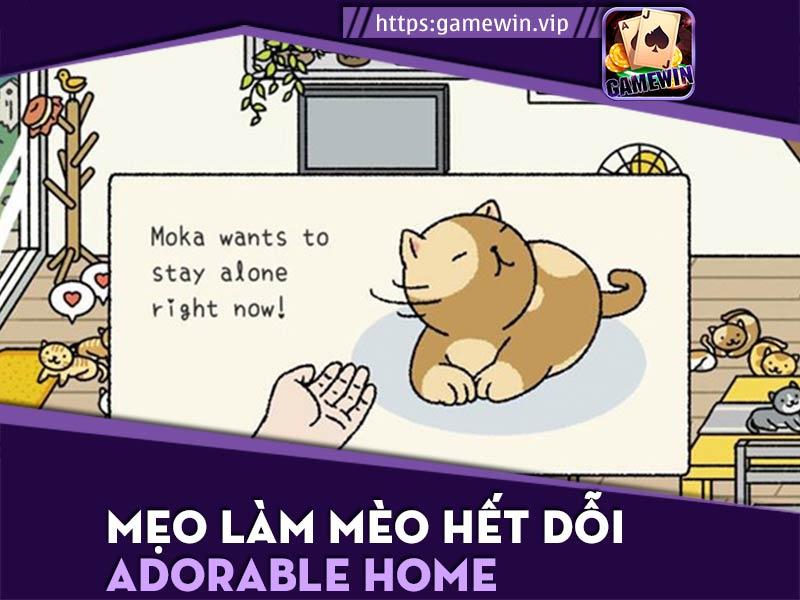 Cách làm mèo hết dỗi Adorable Home cực hiệu quả