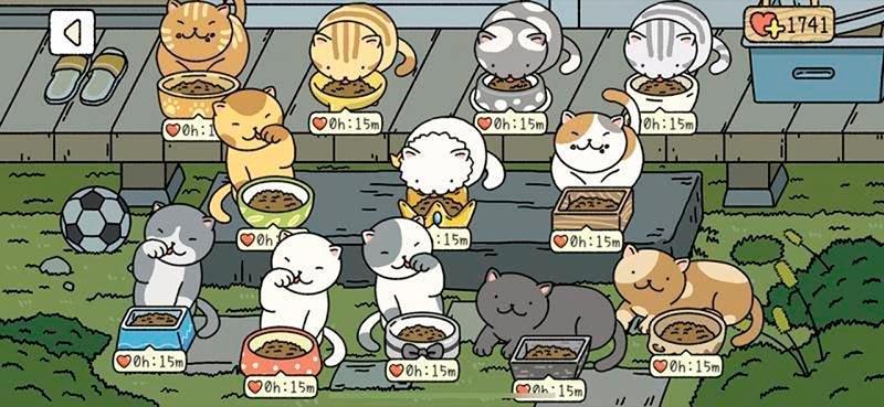 Lưu ý để thực đơn cho 12 chú mèo là như nhau nhé